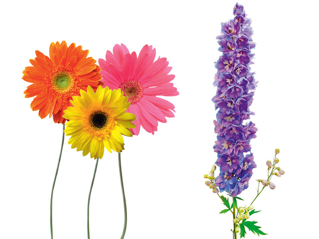 Gerbera and Delphinium