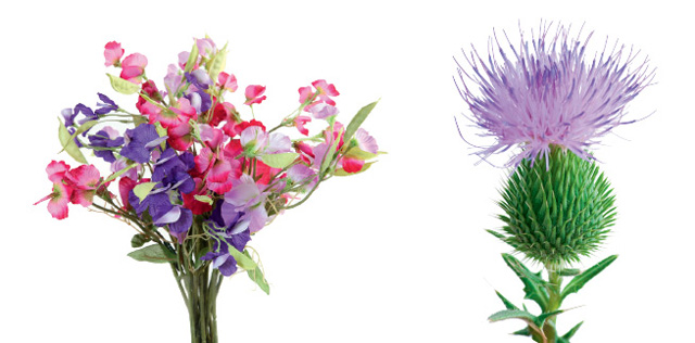 Sweetpea and Thistle