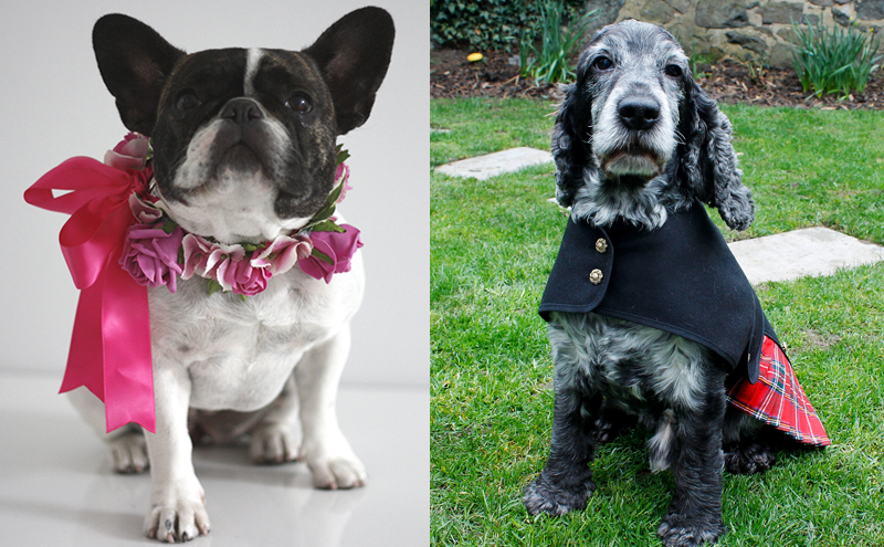 Hand-made silk flower Cupid collar, from £23.95, Boutique Blooms & Royal Stewart tartan dog kilt, from £28.50, Dugz