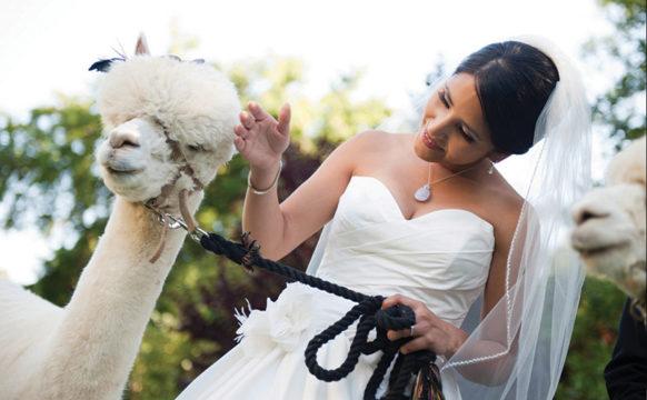 ALPACAS-Bride-1.jpg