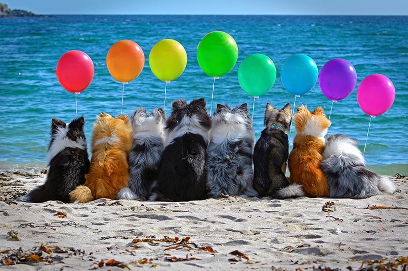 Dogs with balloons