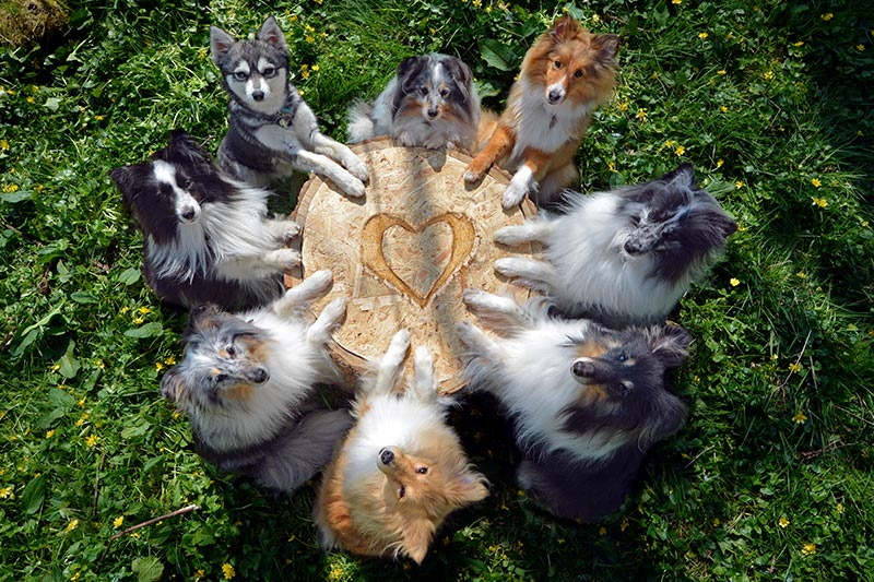 Dogs in a circle