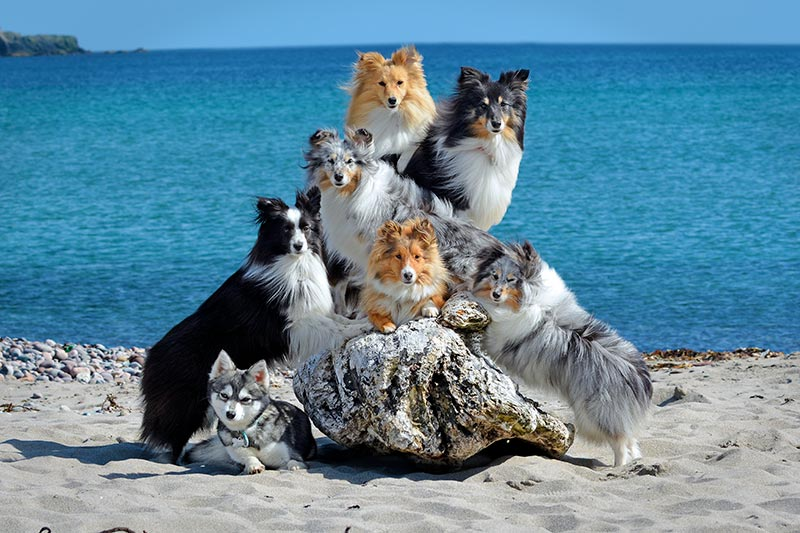 Dogs posing on beach