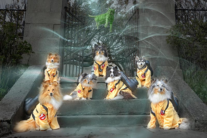 Ghostbuster dogs