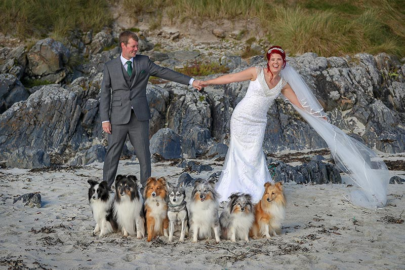 Dogs, bride and groom on beach