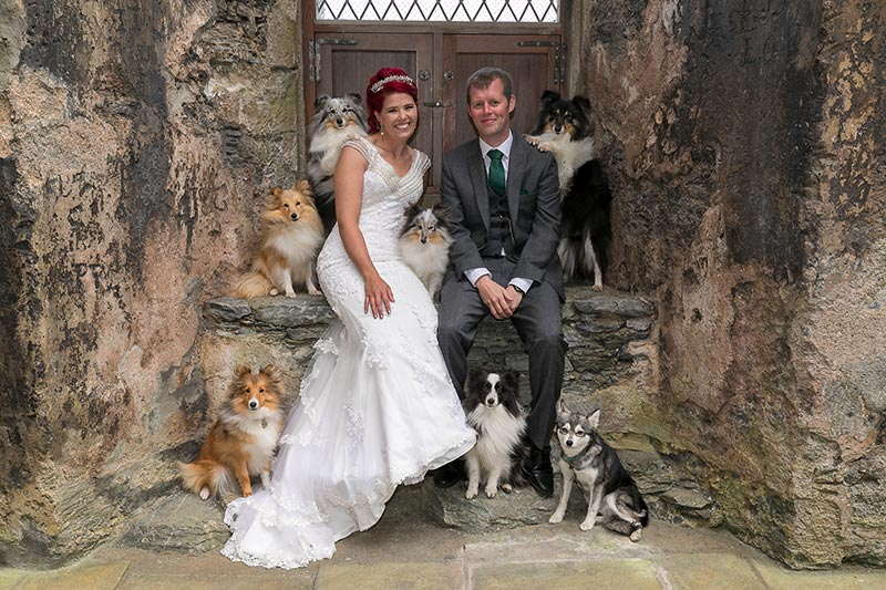 Bride and groom sitting on ledge with dogs