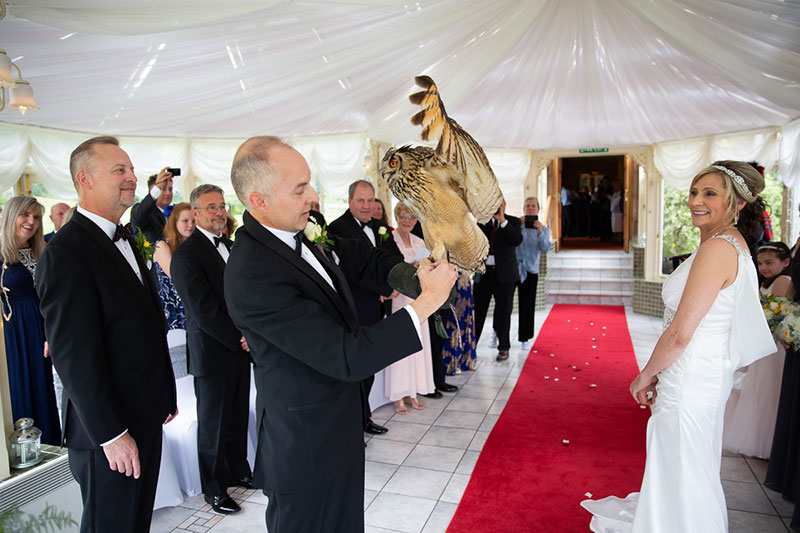 Owl landing on groom