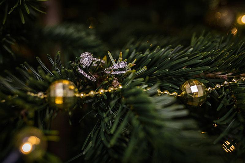 rings in trees