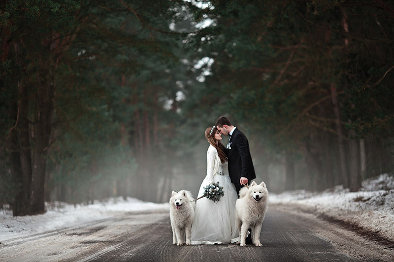 bride and groom with dogs