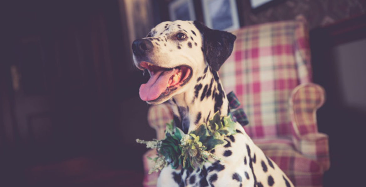 dog wearing floral collar by Isla Duncan Florist