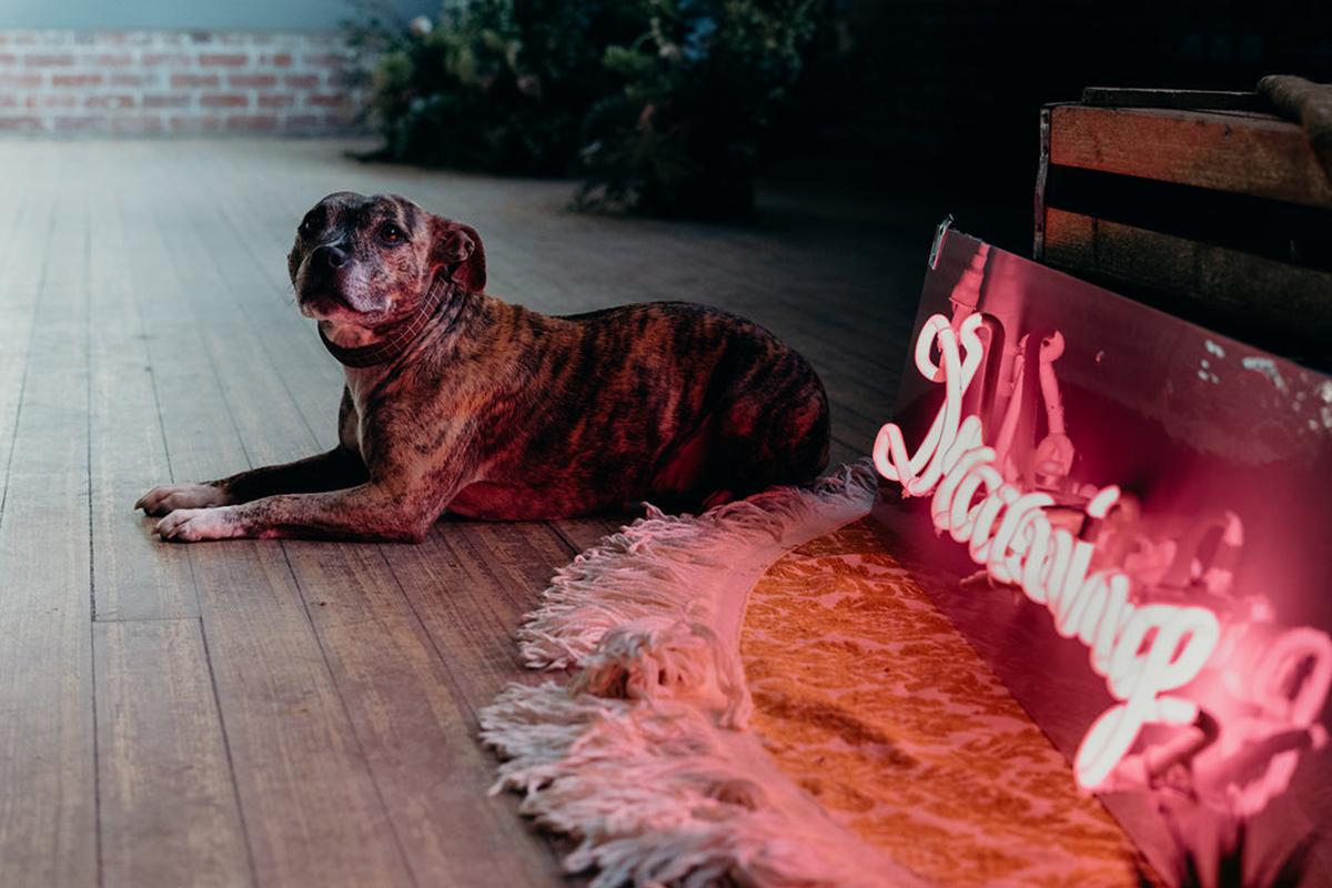 dog-next-to-neon-light