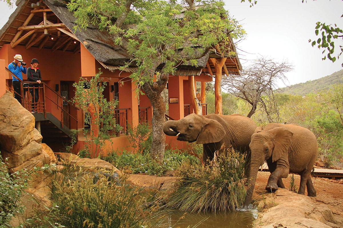 south-africa-thanda-safari