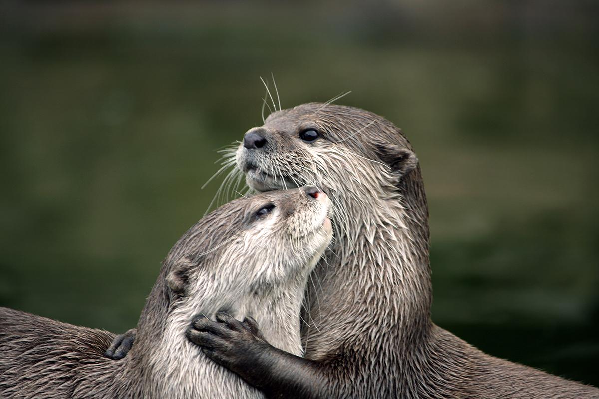 woodland trust otters