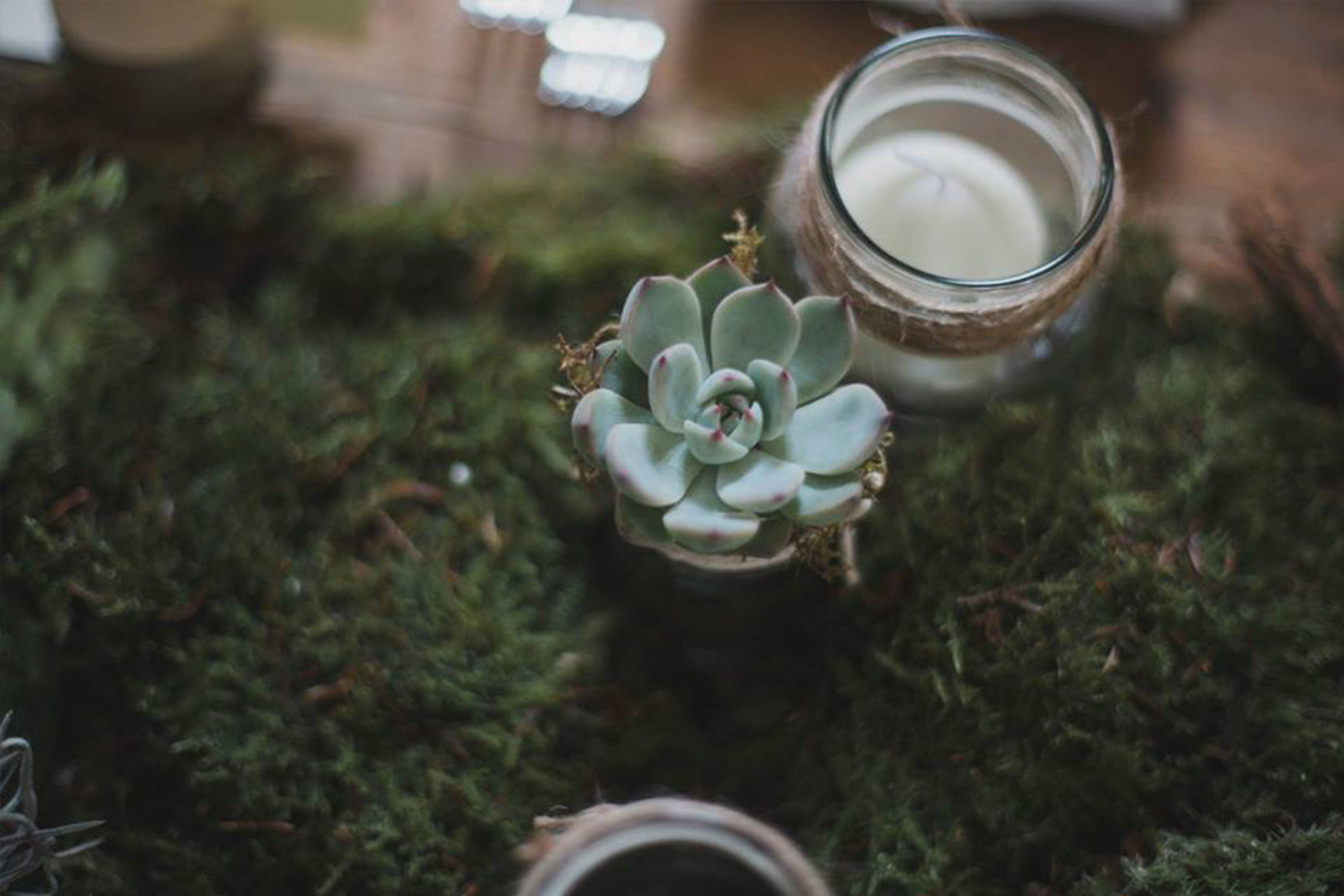 Potted succulent by Jennifer Morrison Florist