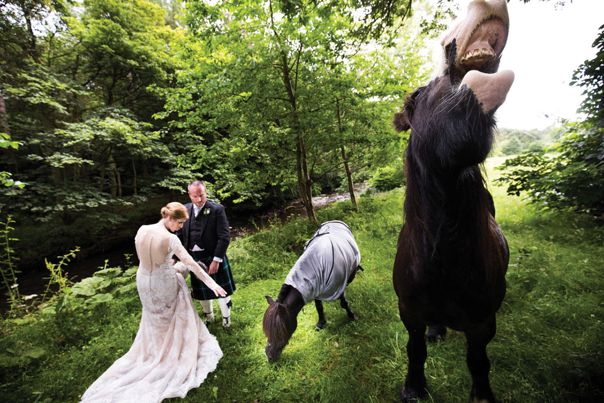 bride-and-groom-with-some-horses-posing-with-them