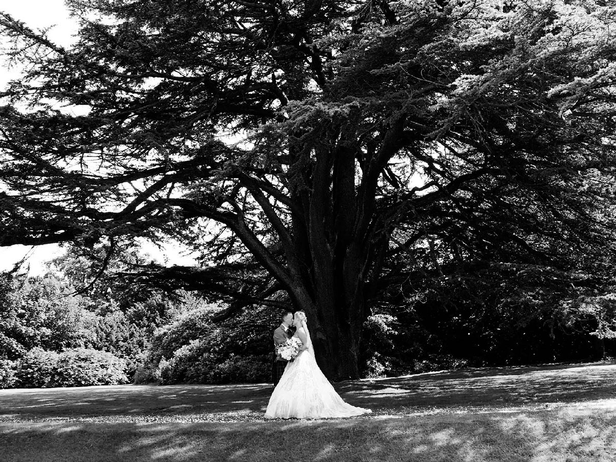 black-and-white-picture-of-bride-and-groom-under-big-tree