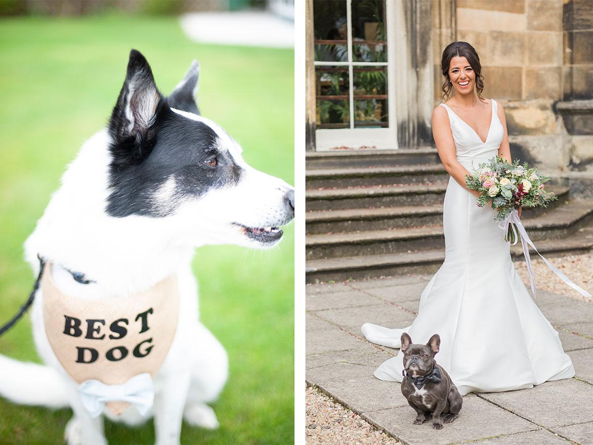 best-dog-at-wedding-with-bride