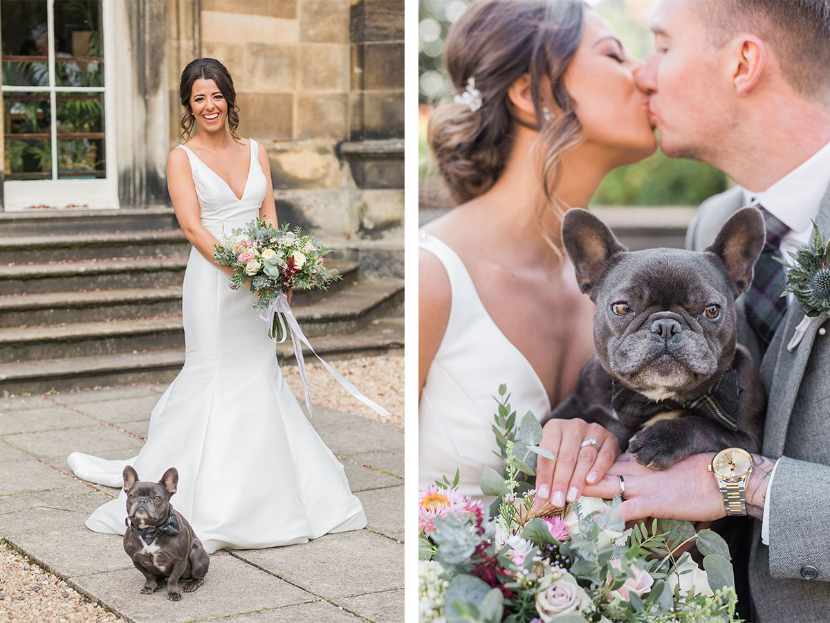 french-bulldog-with-bride-and-groom