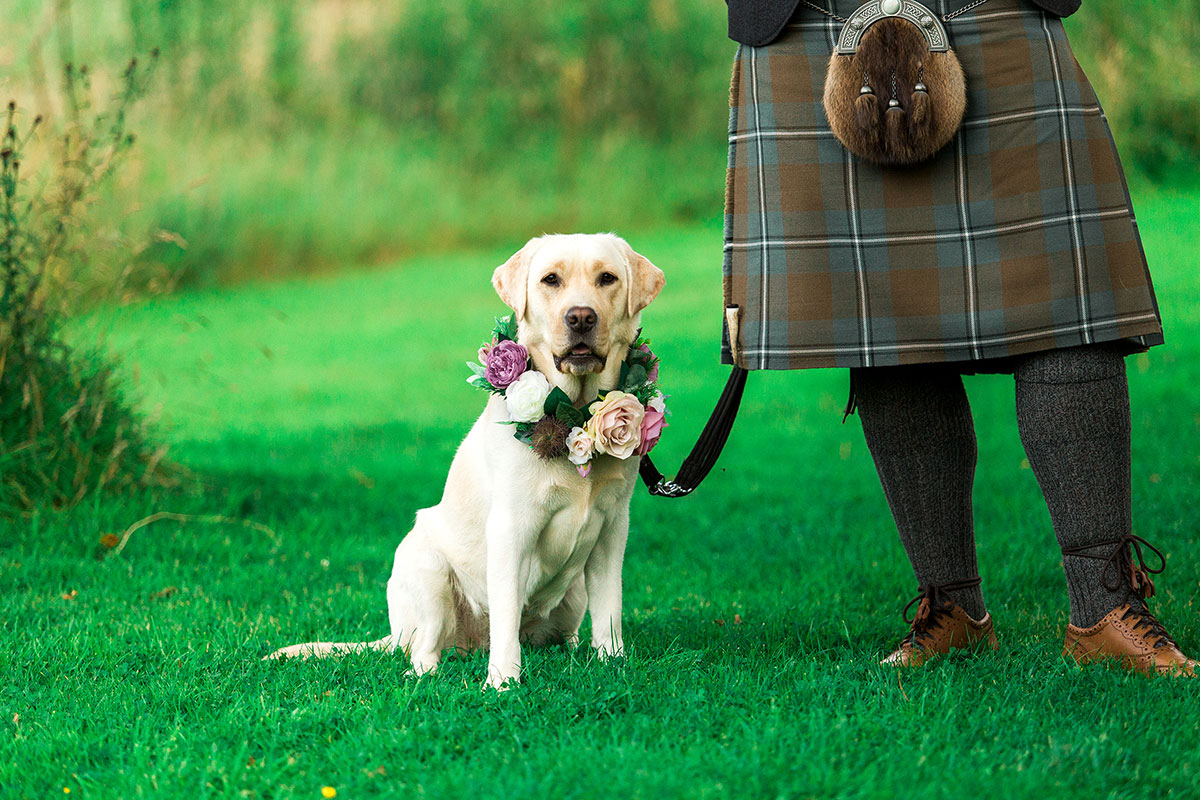 Hemera Visuals labrador wearing wedding flowers groom in kilt