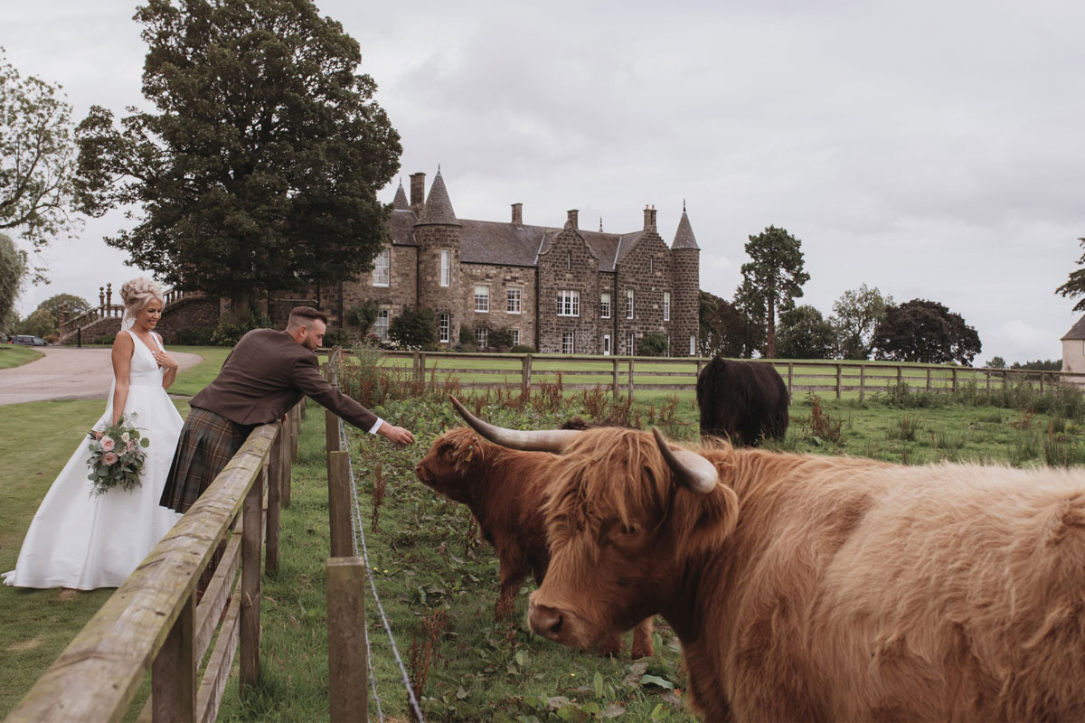 Aboyne Photographics Meldrum House Aberdeen wedding venue outside bride and groom petting highland cow