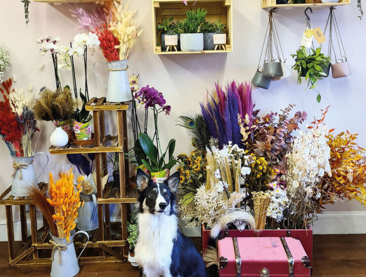 Dog in a flower shop