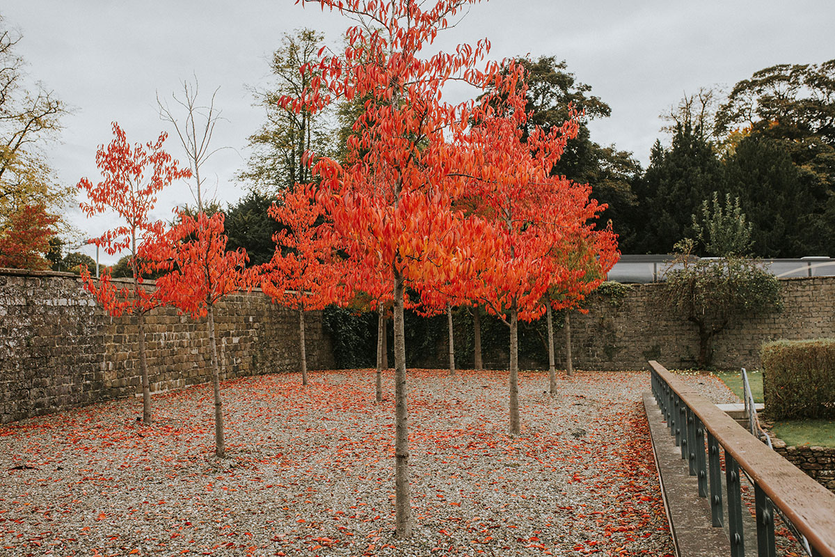 autumn trees at Norton House Hotel Edinburgh