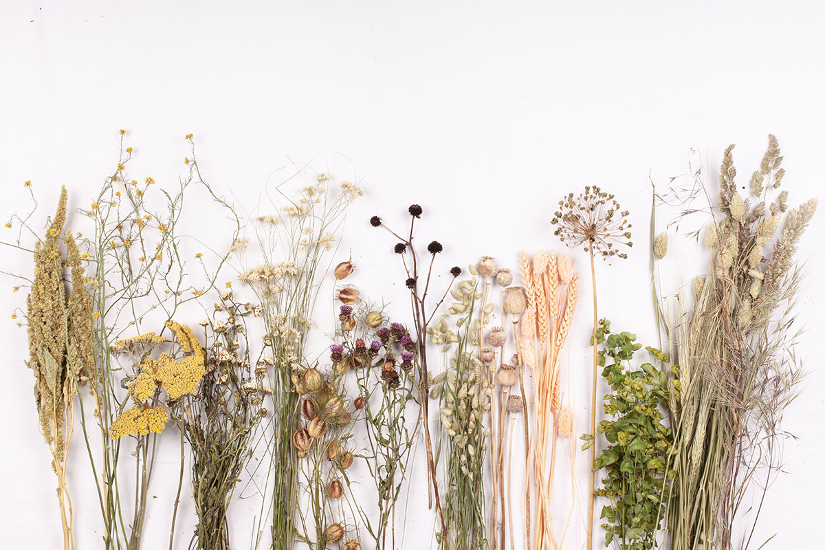 Flat lay image of dried flower stems on white background