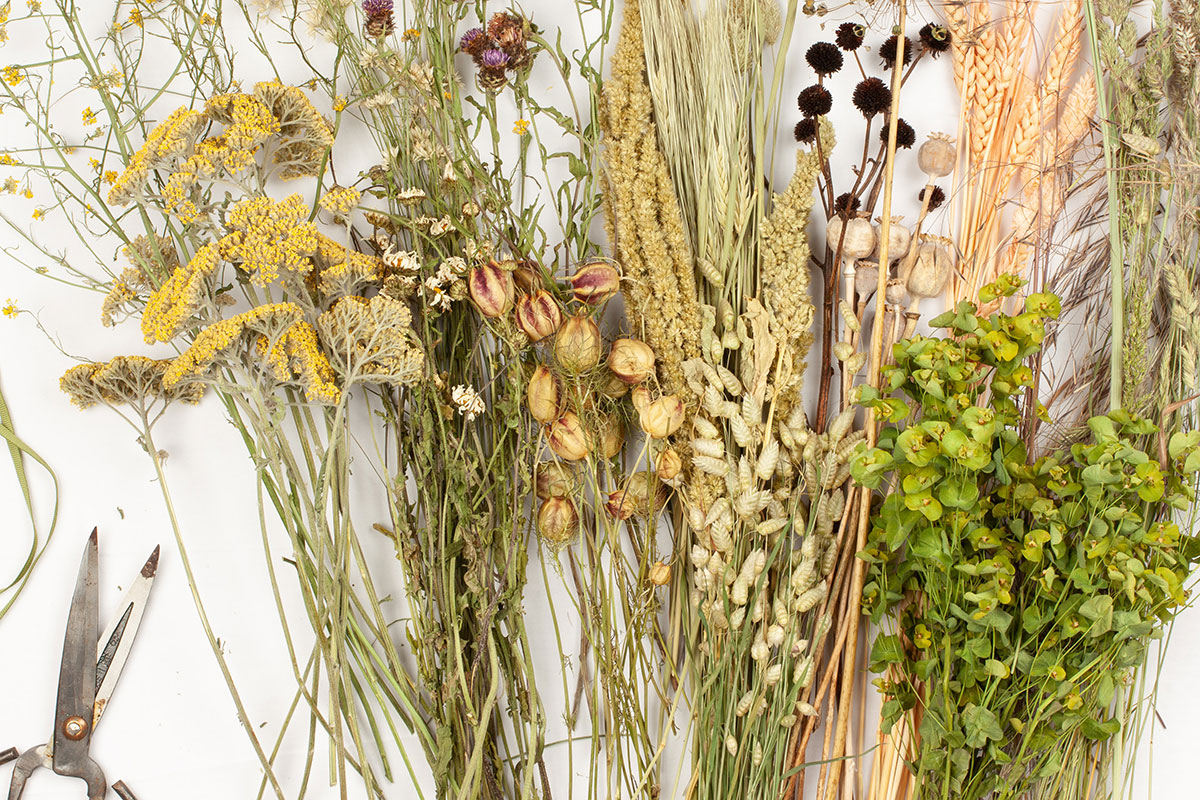 Various dried flower stems with florist shears