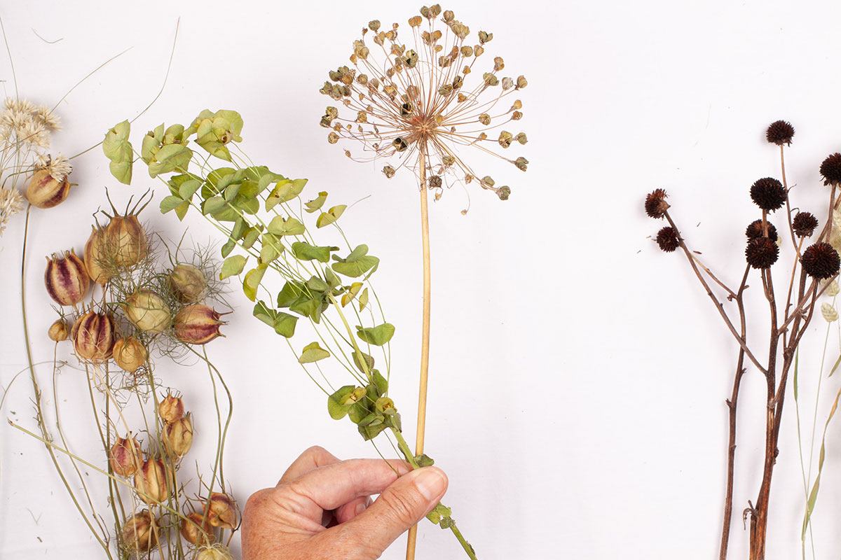 Hand holding two stems of dried flowers
