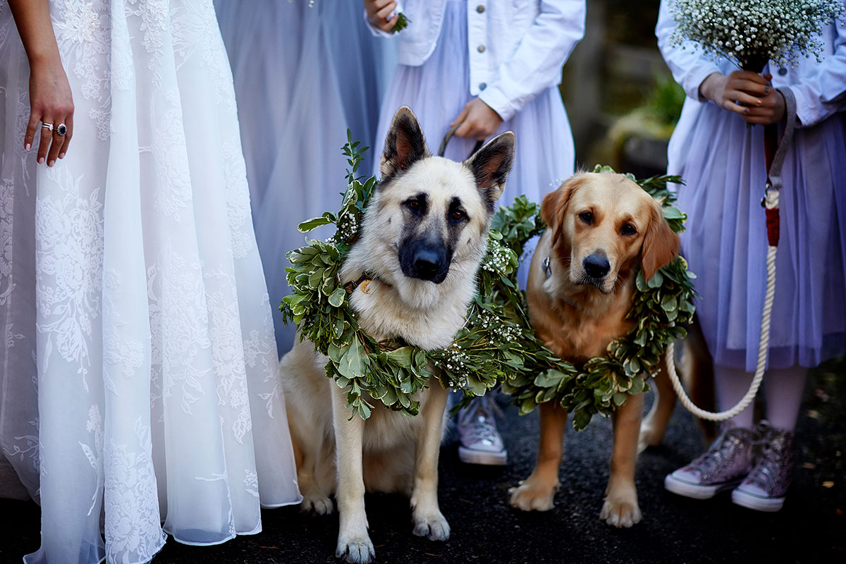 two dogs wearing green leaf wreath around necks standing next to a bride and young bridesmaids