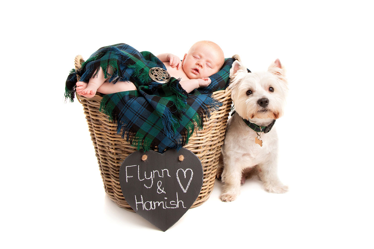 21 a baby in a wicker basked swaddled in a tartan blanket and a West Highland Terrier posing with a chalkboard sign that reads Flynn and Hamish